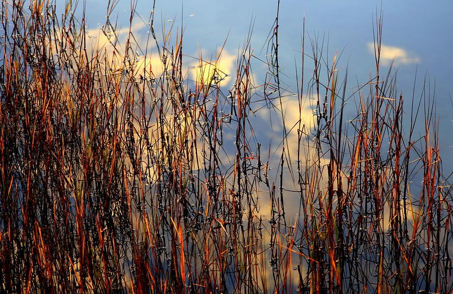 Marsh Mellow Clouds Photograph