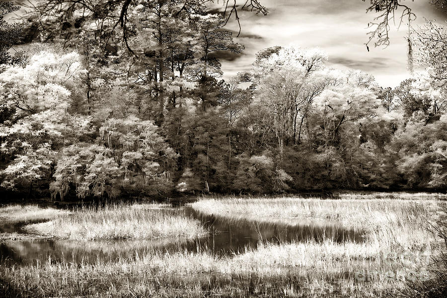 Marshes Photograph - Marshes by John Rizzuto