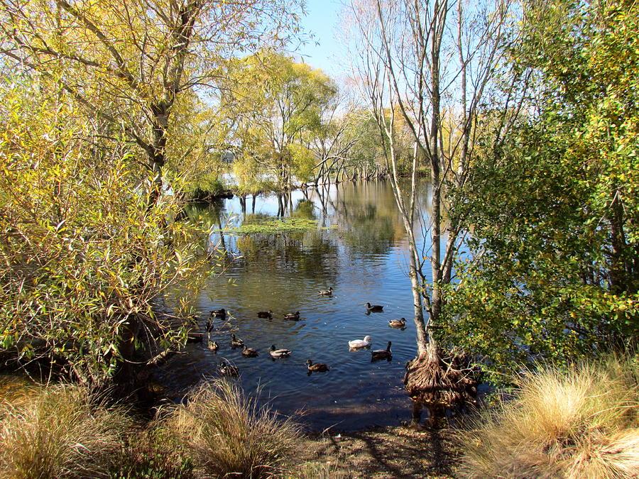 Marshlands New Zealand Photograph