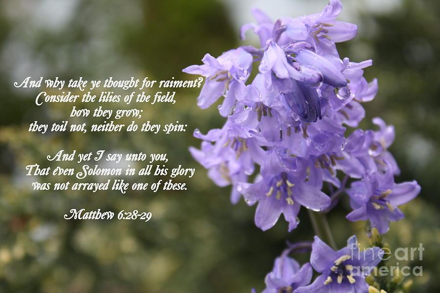 Flowers Photograph - Matthew 6 Verses 28 And 29 by Vicki Maheu