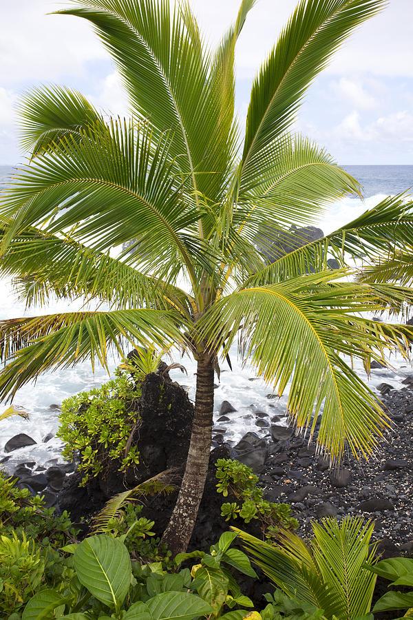 Maui Coast Photograph