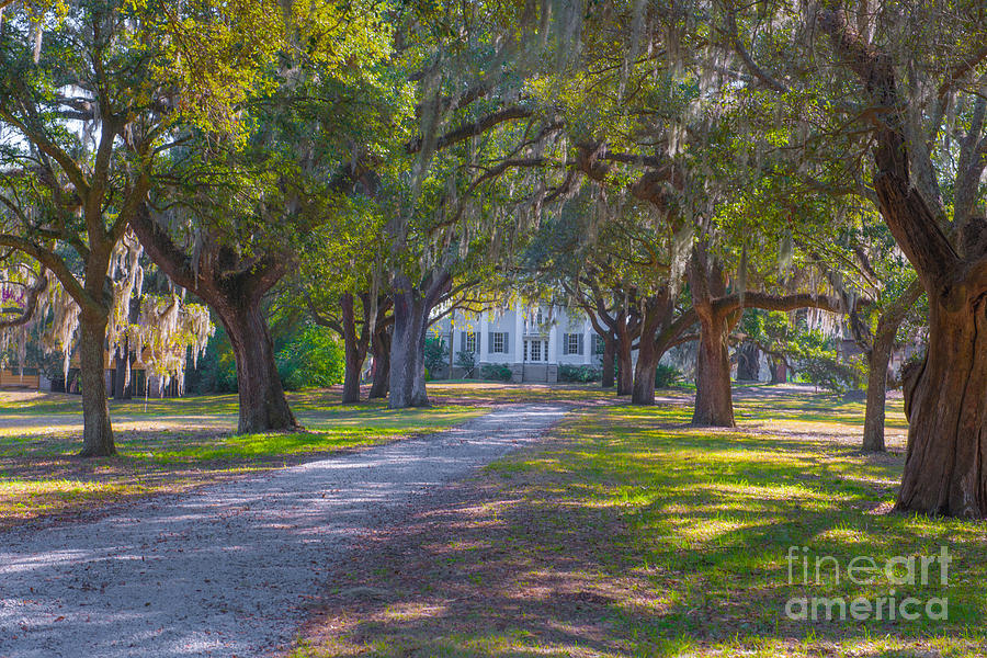 Mcleod Plantation Photograph