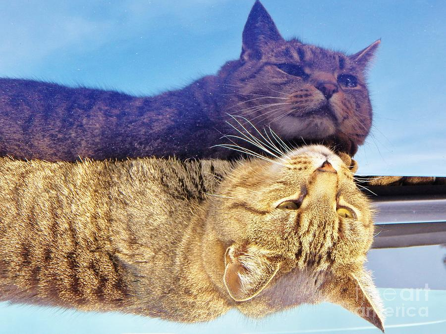 Cat Photograph - Me And Me by Judy Via-Wolff