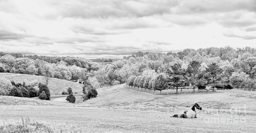 Meadow Bw Photograph
