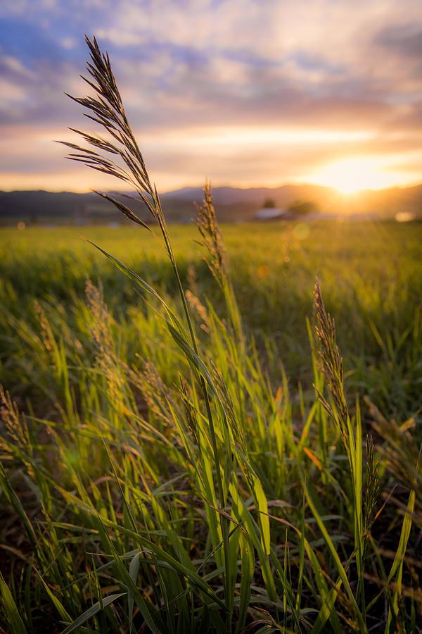Meadow Light Photograph