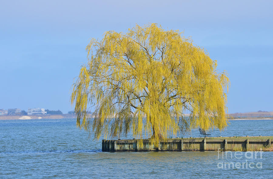 Meditation Tree On Lake Photograph