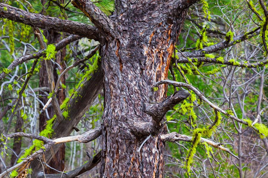 Medusa Tree Painting
