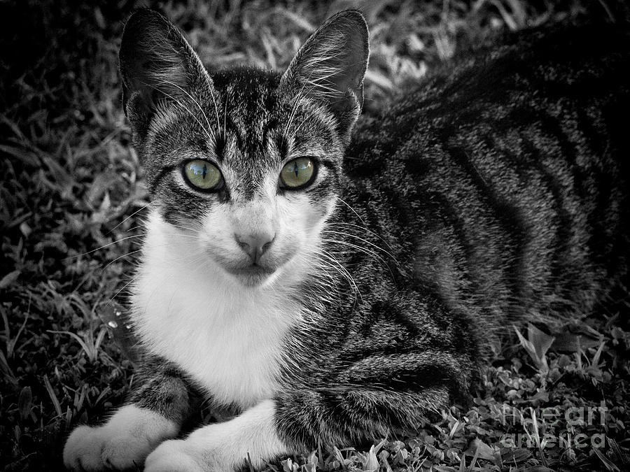 Cat Photograph - Meet George Again by Karen Lewis