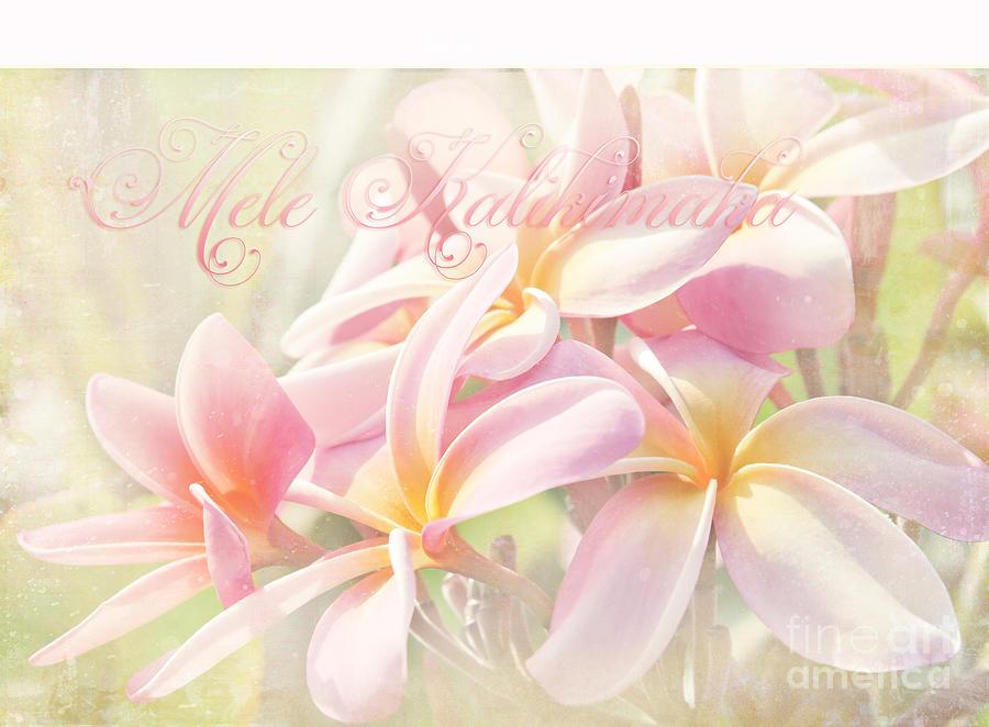 Mele Kalikimaka - Pink Plumeria - Hawaii Photograph