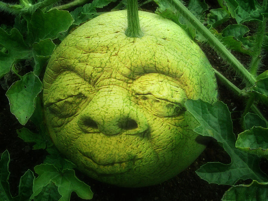 Melon Head Photograph