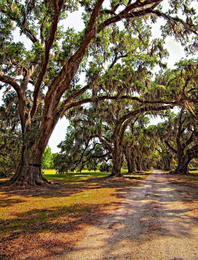 Evergreen Plantation Photograph - Memory Lane by Steve Harrington