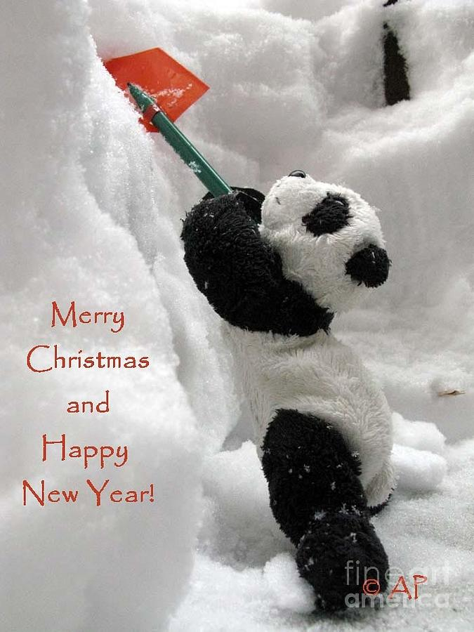 Baby Panda Photograph - Merry Christmas And Happy New Year From Ginny ...