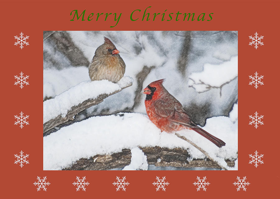 Merry Christmas Pair Of Cardinals is a photograph by Michael Peychich ...