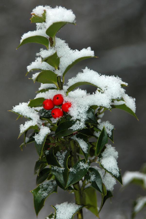 Merry Christmas Photograph - Merry Christmas by Raymond Salani III