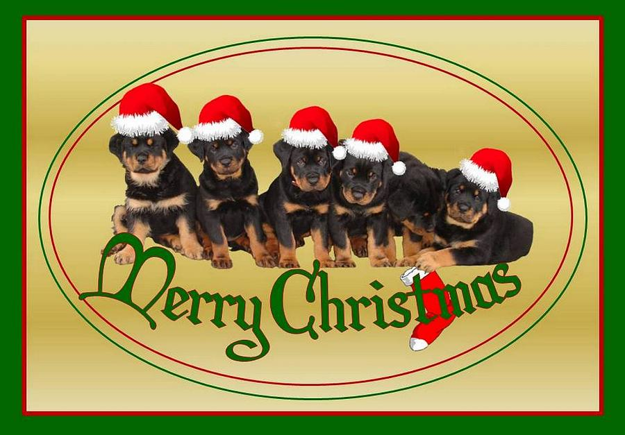 Merry Christmas Rottweiler Puppies Greeting Card Photograph