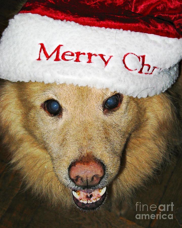 Merry Christmas Photograph