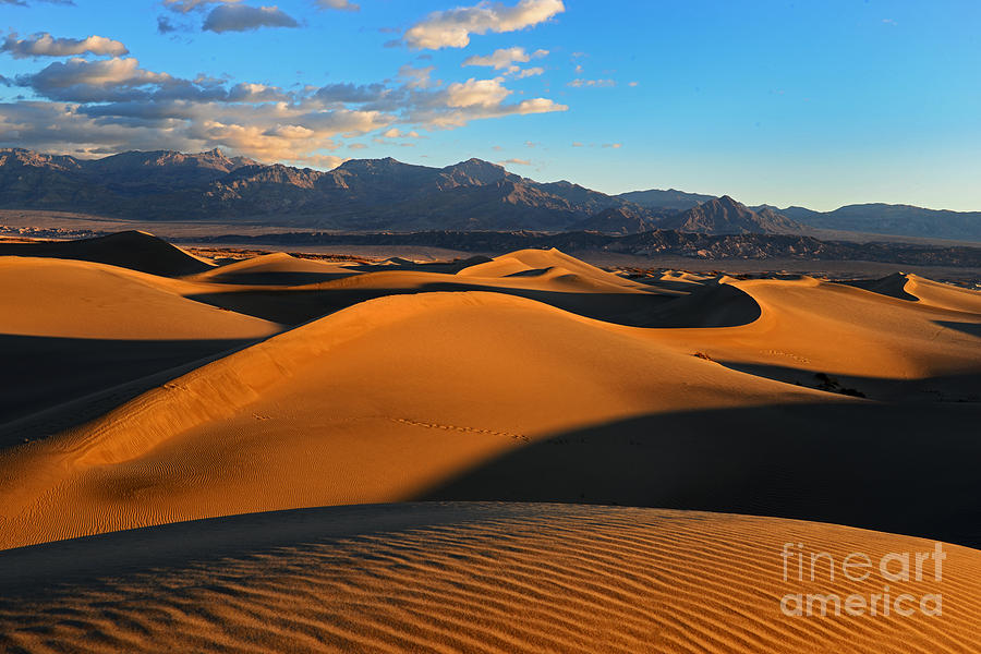 Mesquite Sand Dunes Death Valley Photograph  - Mesquite Sand Dunes Death Valley Fine Art Print