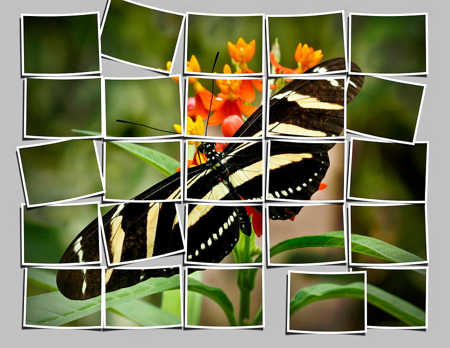 Animals Photograph - Messed Up Butterfly by Jean Noren