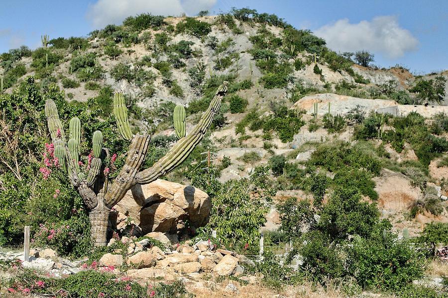 Mexican Desert Landscape Photograph