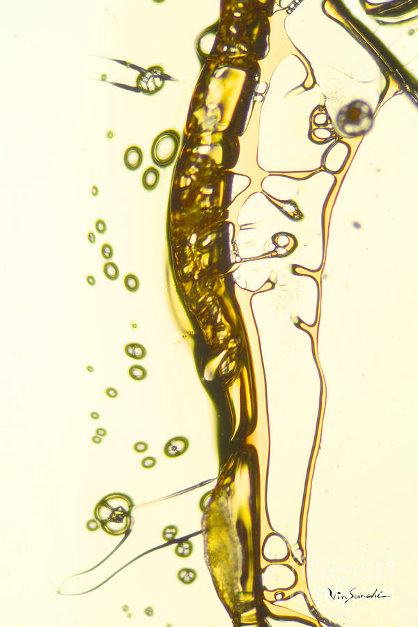 Micro Art Beer 13 Pyrography