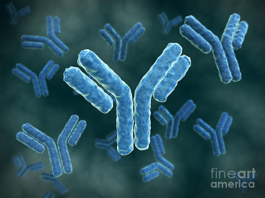 Microscopic View Of A Human Chromosome Digital Art  - Microscopic View Of A Human Chromosome Fine Art Print