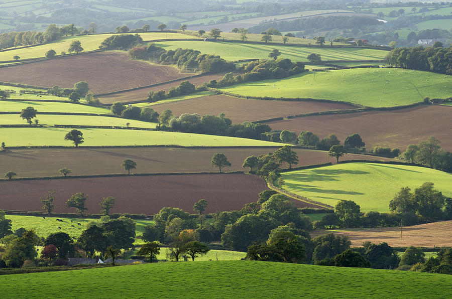 Mid Devon Fields Photograph