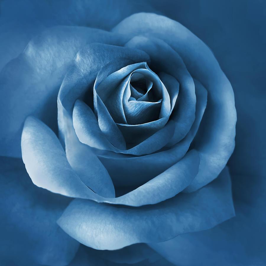 MorJer's Art - Midnight Flower
