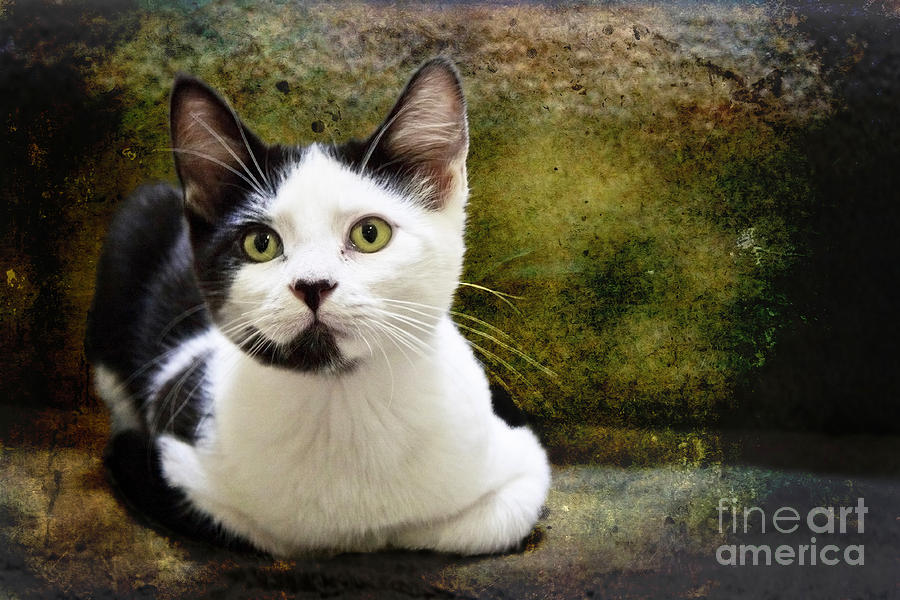 Kittens Photograph - Mika by Ellen Cotton