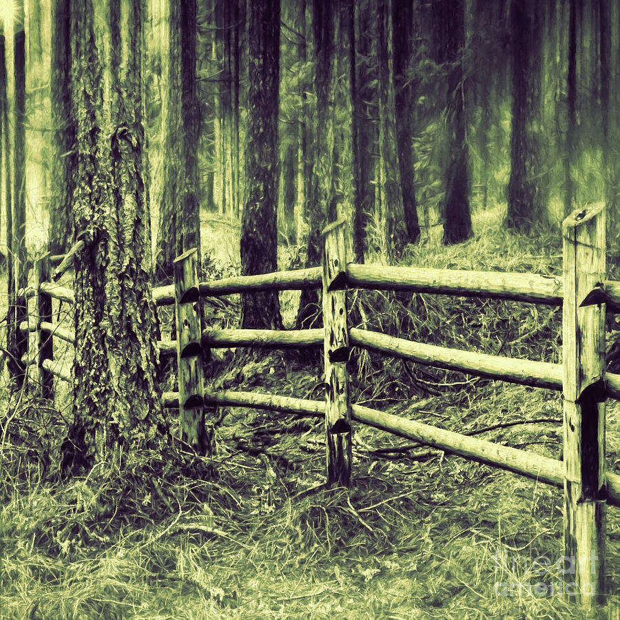 mima mounds forest fence photograph by jean okeeffe macro abundance art. Black Bedroom Furniture Sets. Home Design Ideas