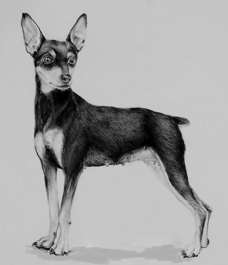 Min Pin Drawing