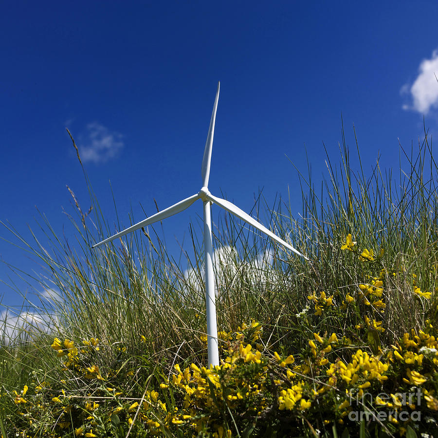 Miniature Wind Turbine In Nature Photograph