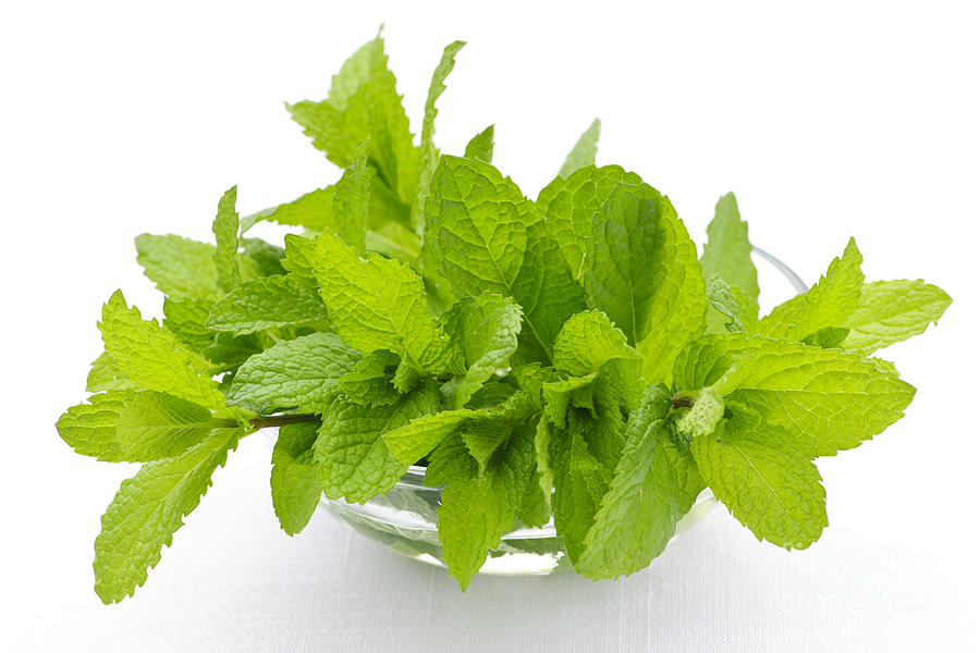 Mint Sprigs In Bowl Photograph