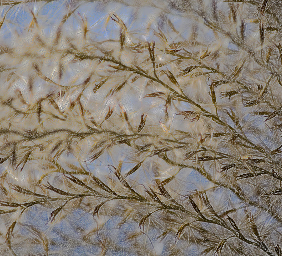 Miscanthus Sinensis Iv Photograph  - Miscanthus Sinensis Iv Fine Art Print