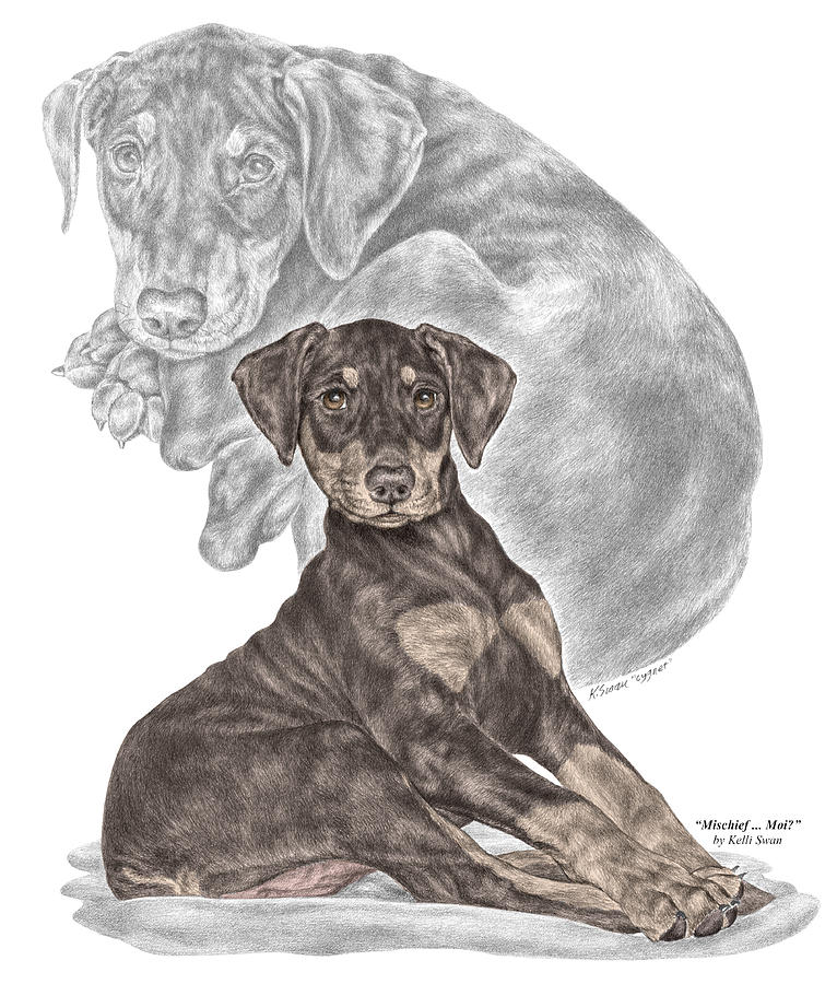 Mischief ... Moi? - Doberman Pinscher Puppy - Color Tinted Drawing