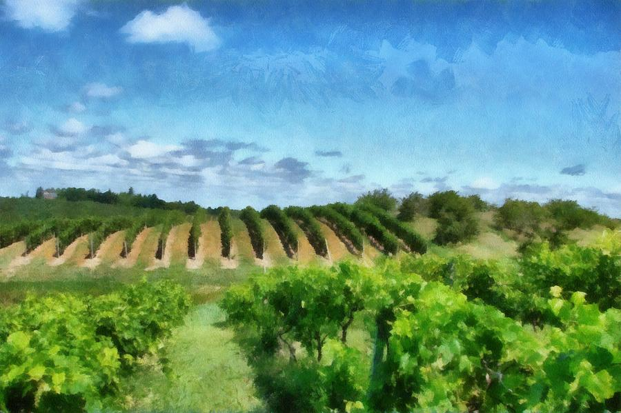 Mission Peninsula Vineyard Ll Photograph  - Mission Peninsula Vineyard Ll Fine Art Print