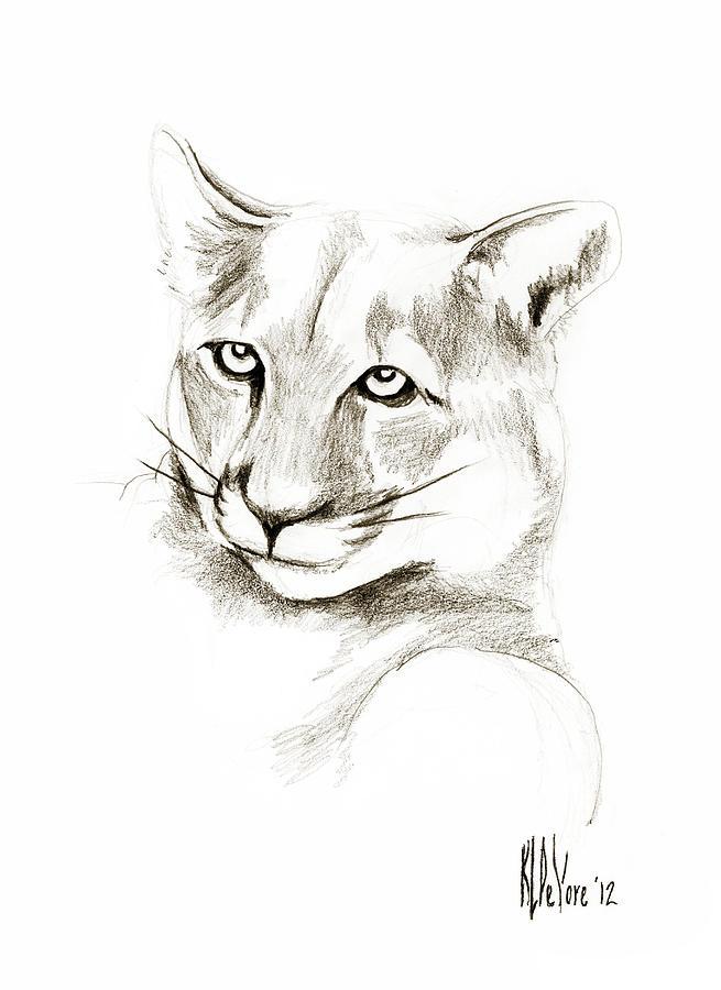 Missouri Mountain Lion II Drawing