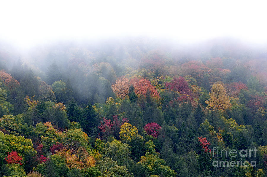 Mist And Fall Color Photograph