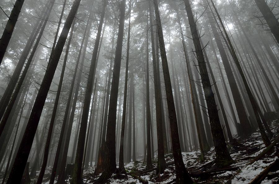 Mist In The Woods Photograph