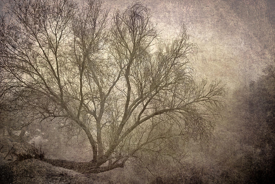 Landscapes Photograph - Mist Tree by Guido Montanes Castillo