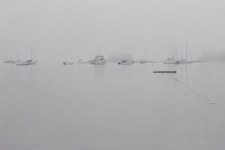 Misty Morning In Acadia Photograph  - Misty Morning In Acadia Fine Art Print