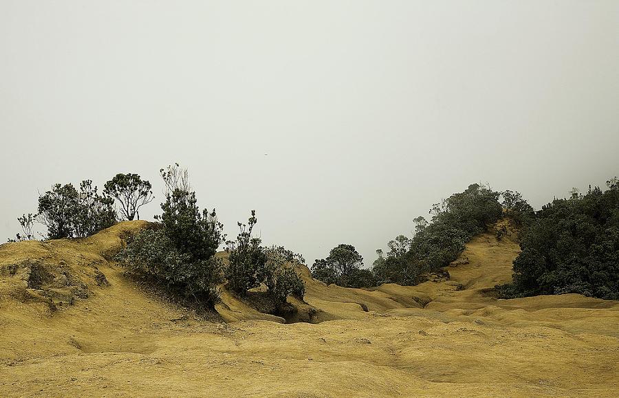 Misty Path Photograph