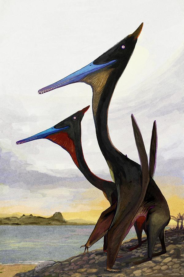Pterodactyl dinosaur sightings