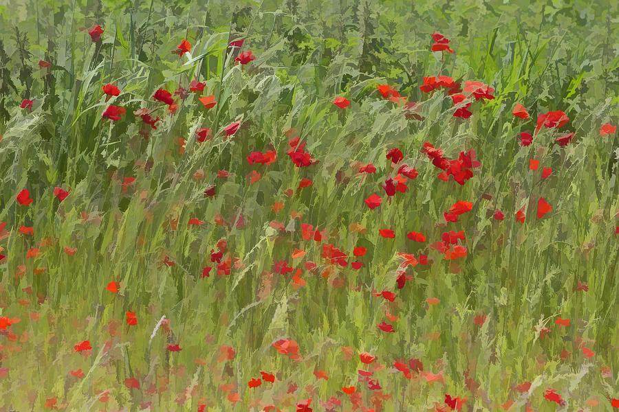 Monet Poppies IIi Photograph