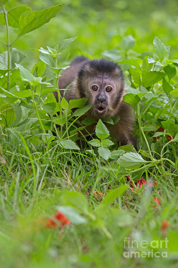 Monkey Shock Photograph