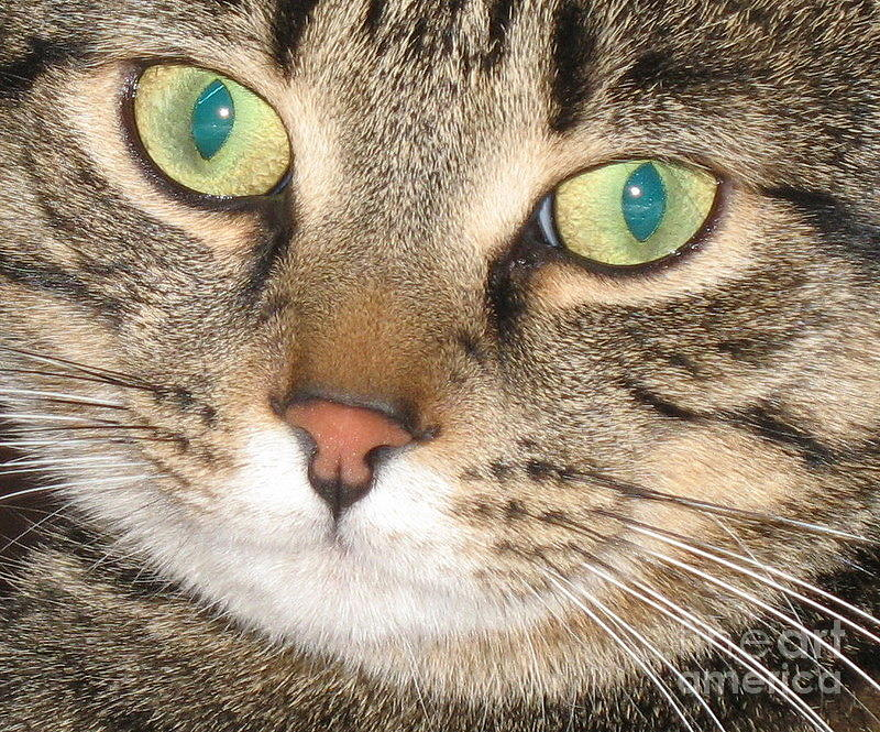 Monty The Cat Photograph  - Monty The Cat Fine Art Print