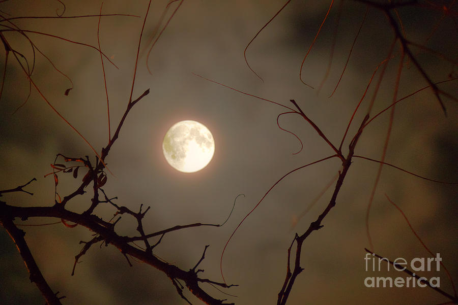 Moon Behind Branches Photograph