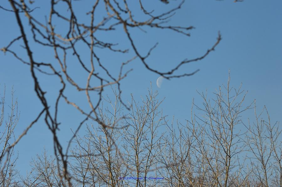 Moon On Treetop Photograph