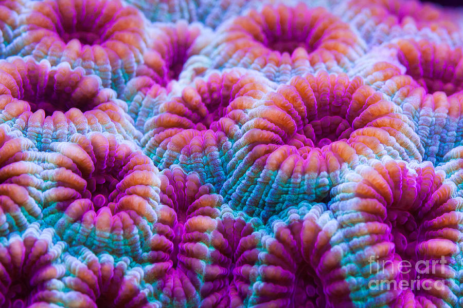 Coral Photograph - Moon Rock by Steve Ruddy
