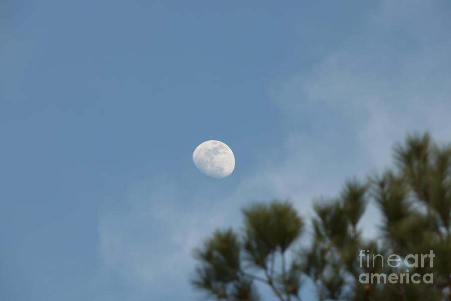 Moon Slice Photograph