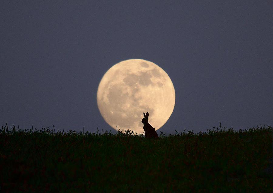 Supermoon Photograph - Moongazer by Steve Adams